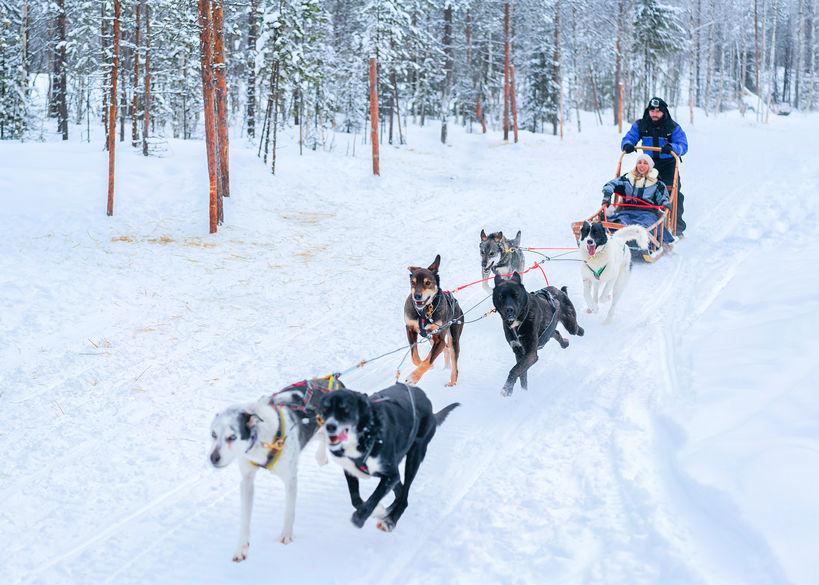 chien de traineau alpes